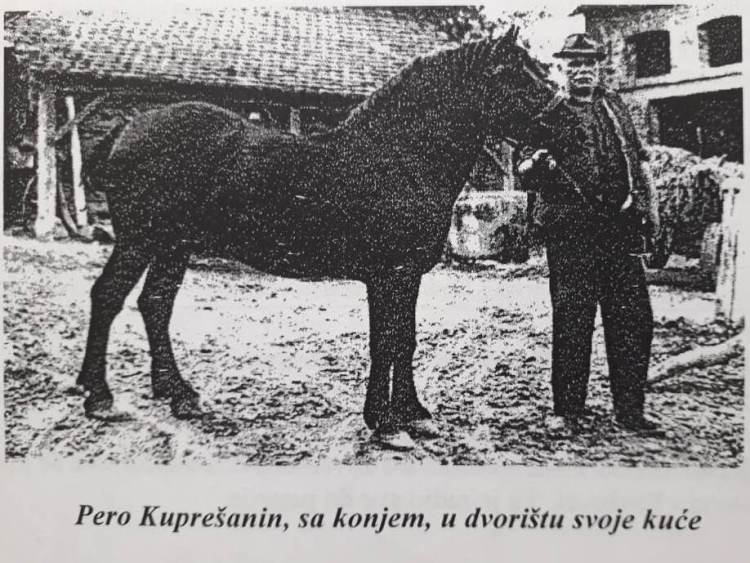 The love for horses is part of Valentina's heritage. Already her great-great-great grandfather and his relatives were working with horses. Here you see Pero Kupresan with a horse.