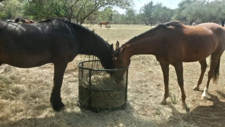 Horses need a companion to socialize. Observing them also is a great opportunity to learn the horse language
