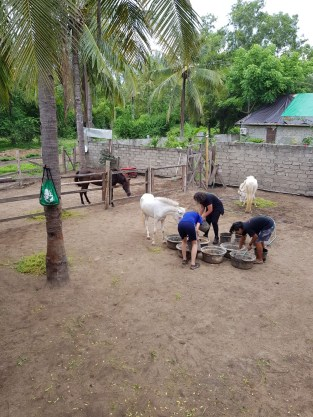 preparing feed for the horses in a horse rescue on Gili T