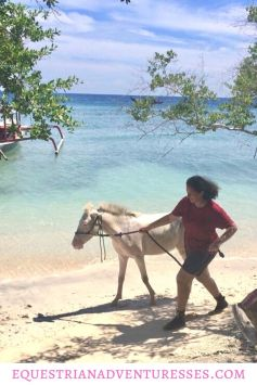 Pinterest Pin for article: Volunteering to Help the Horses on Gili T