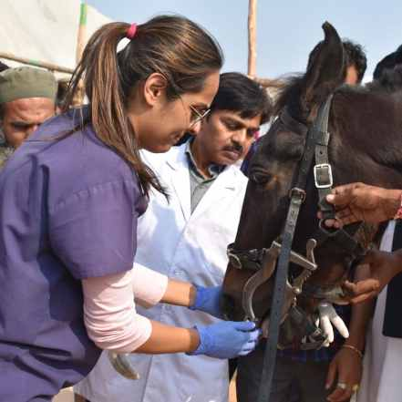 Akruti is doing a demonstration of horse dentistry to create awareness about equine dental care in India