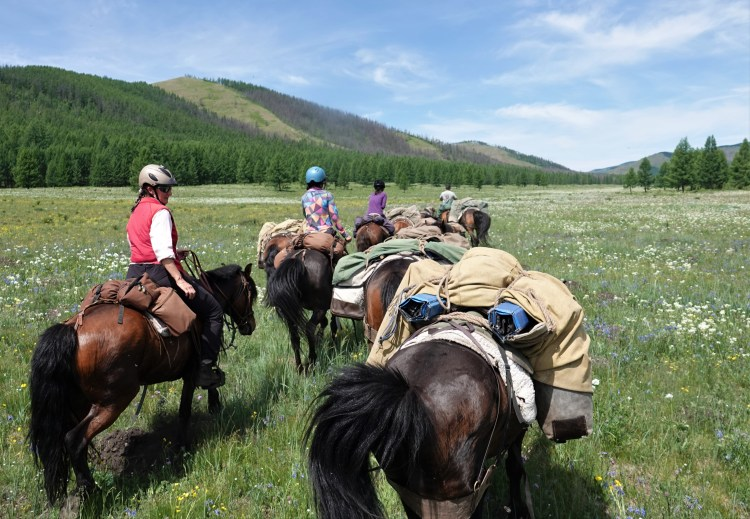 Horseback riding trips in Mongolia offer a great opportunity to see equine behavior first hand