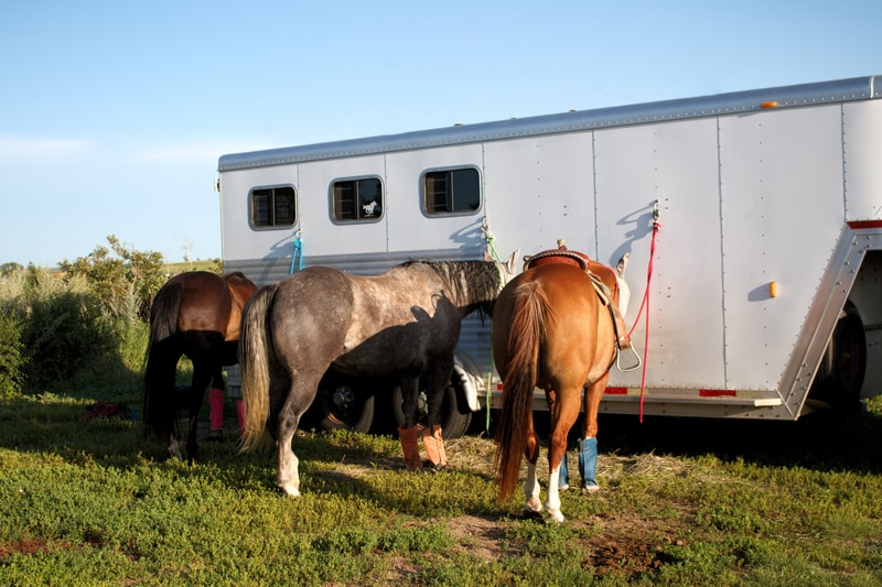 Some anxious horses get antsy while traveling and can accidentally injure themselves. Standing wraps and even bell boots can help protect your horse while they travel.