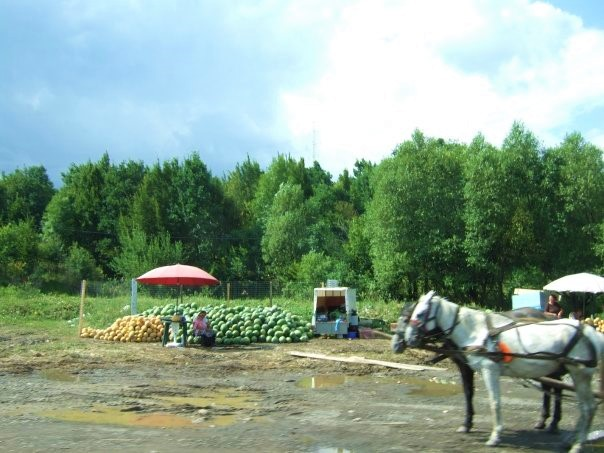Two horses pulling a carriage in front of a fruit stall in the Romanian country side