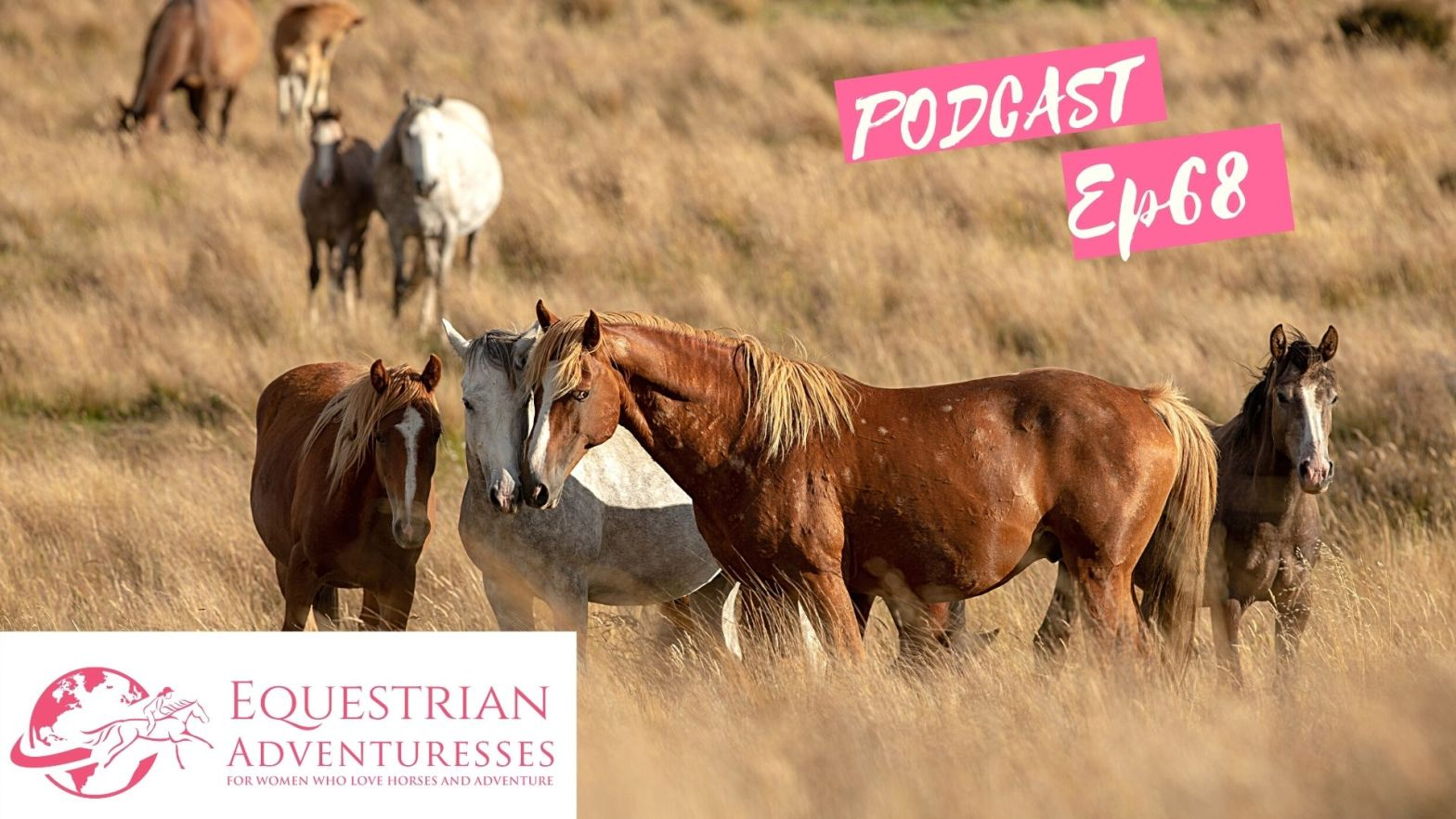 Equestrian Adventuresses Travel and Horse Podcast Ep 68 - Saving the Wild Horses of New Zealand