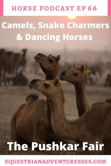 Horse and travel podcast pin - Ep 66 - Camels, Snake Charmers and Dancing Horses - The Pushkar Camel Fair