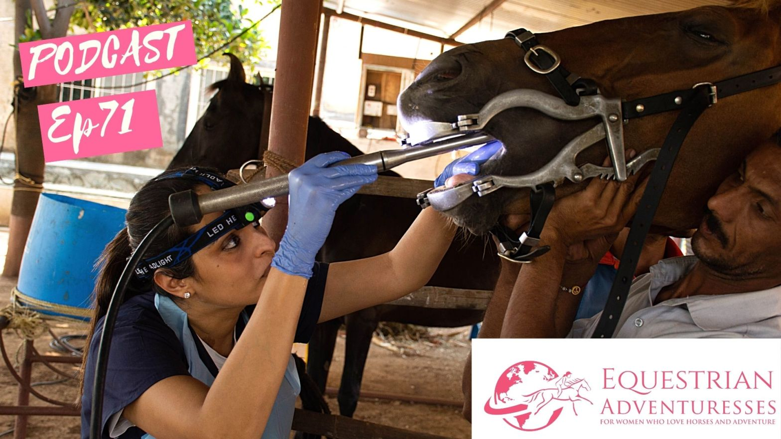 Equestrian Adventuresses Travel and Horse Podcast Ep 71 - Equine Dentist
