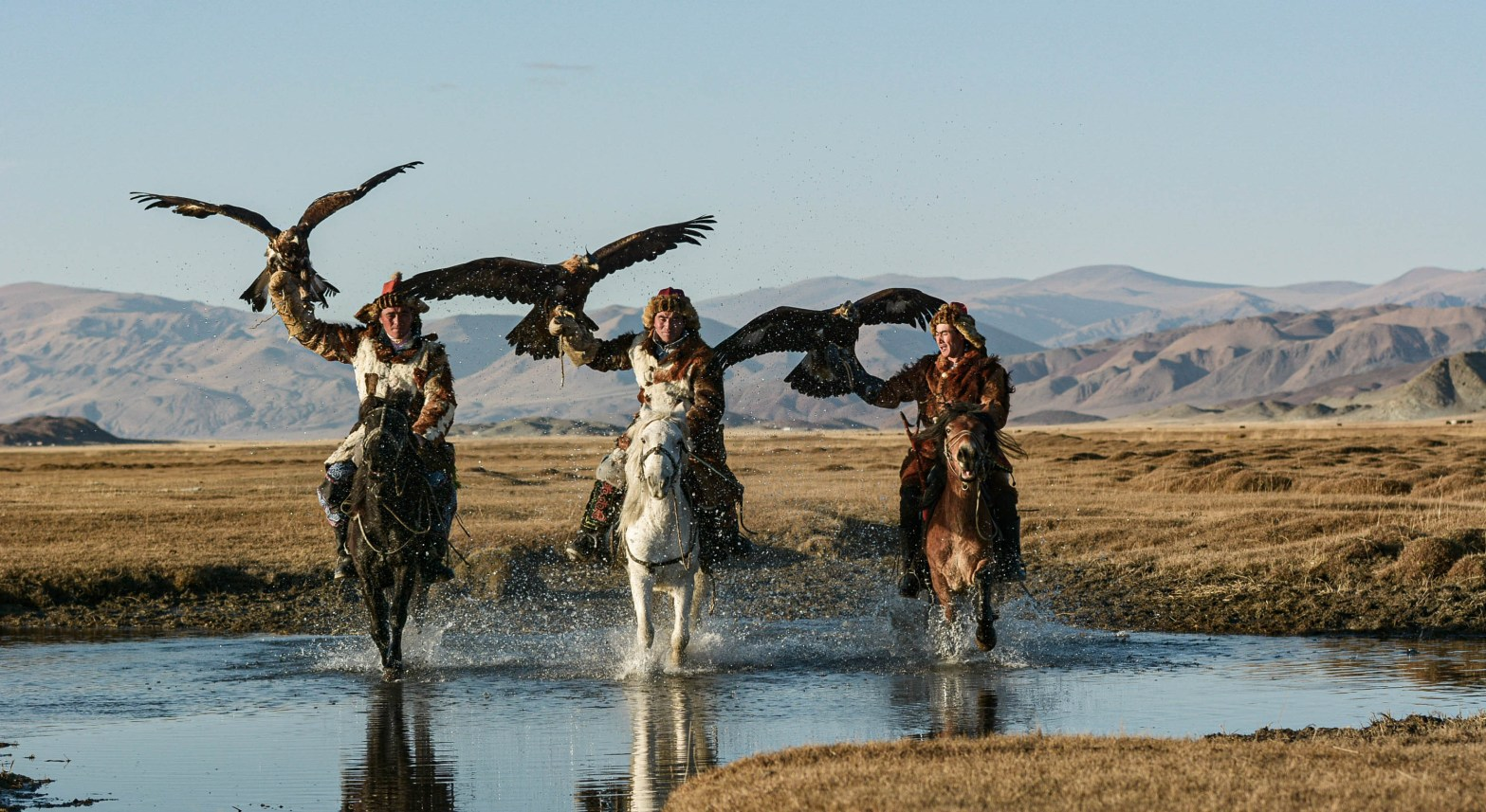 Three Mongolian eagle hunters at a full gallop showing off their skills