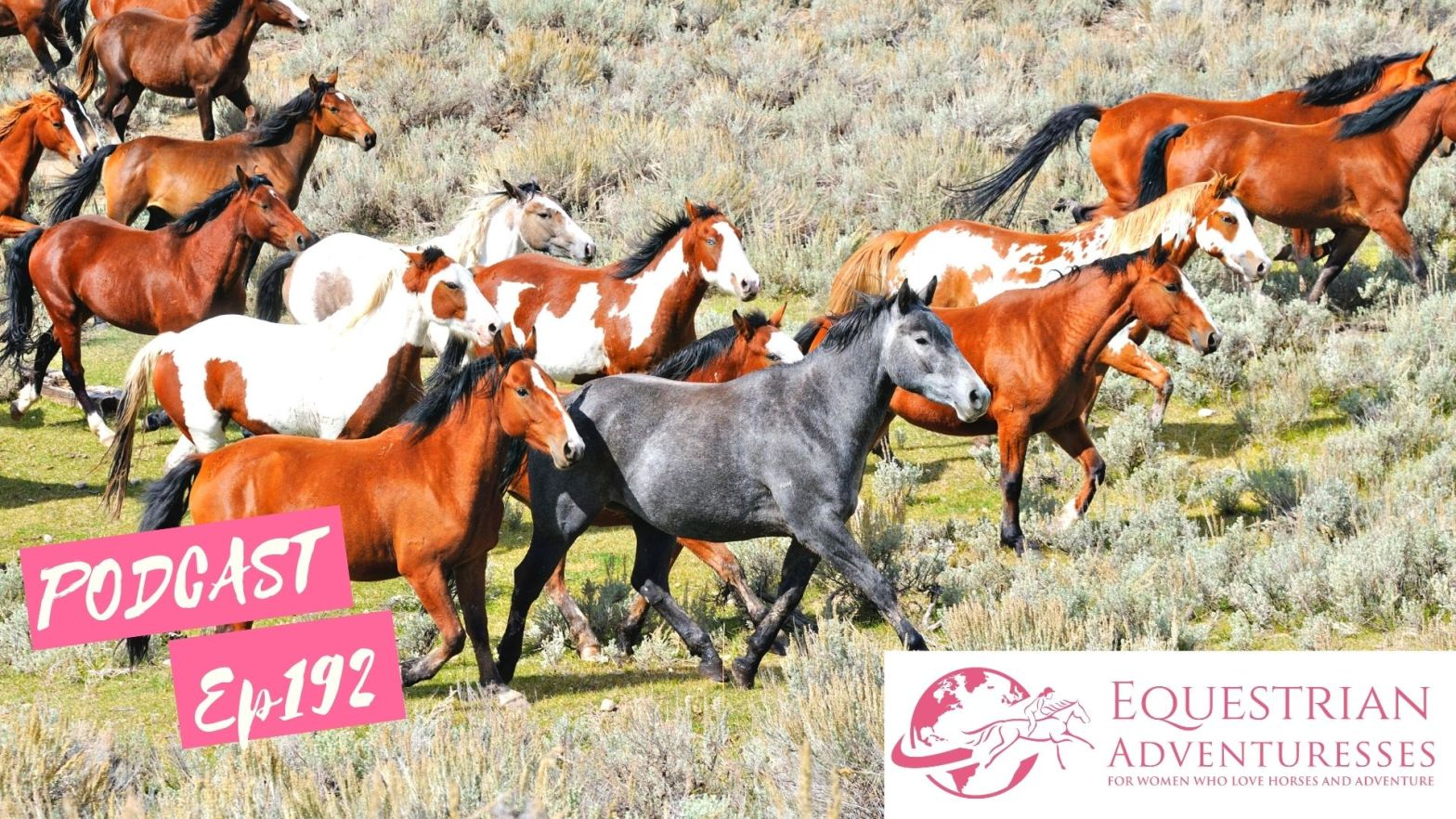 Equestrian Adventuresses Travel and Horse Podcast Ep 192 - Horse Color Genetics