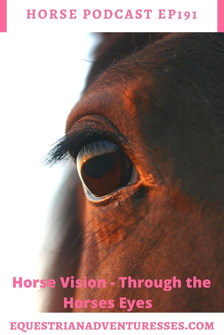 Horse and travel podcast pin - Ep191: Horse Vision - Through the Horses Eyes