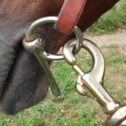 put the lunge line on the inside ring of the bit