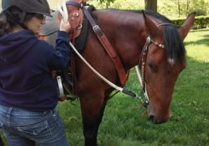 give your horse time to learn the right answer