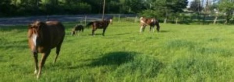 shiny ponies on healthy pasture