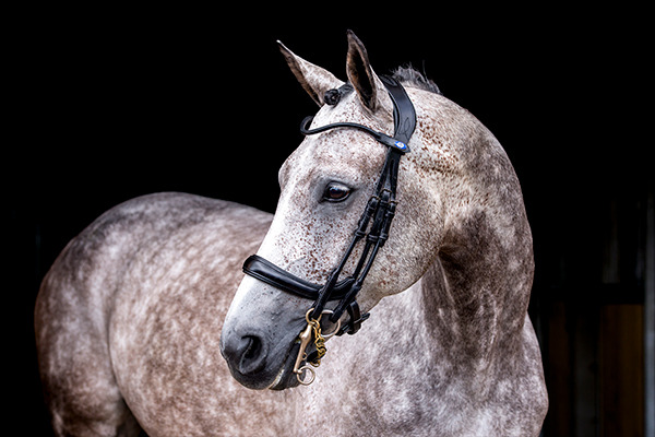 PS of Sweden Paragon double bridle new zealand
