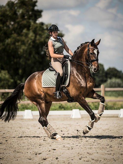 dressage saddle pads