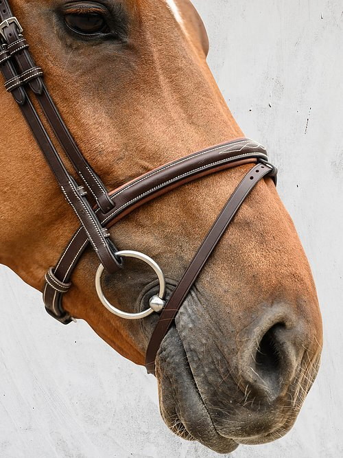 stockholm flash noseband bridle