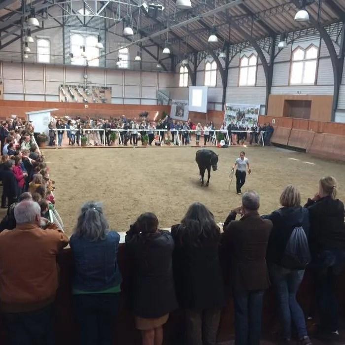 equestrian federations