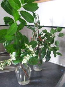 bouquet-nature-2