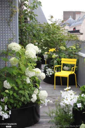 Amenager-sa-terrasse-plantes-vertes-et-fleuries