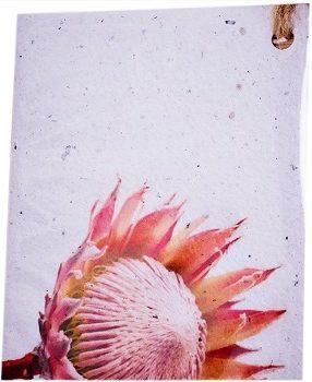 protea eco card