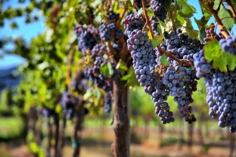 Hemel-en-Aarde Pinot Noir