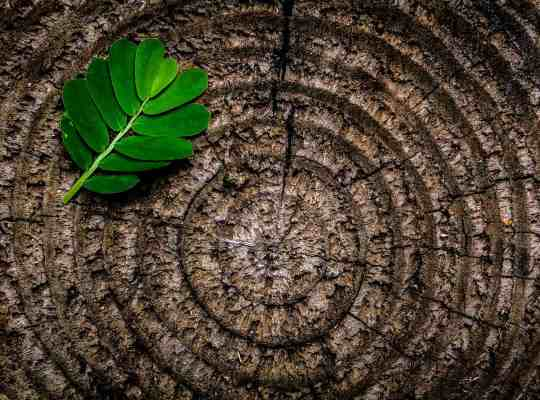Zen Ontspanning Rust Kalm Relax Evenwicht Mindset Balans Harmonie Chill Kracht