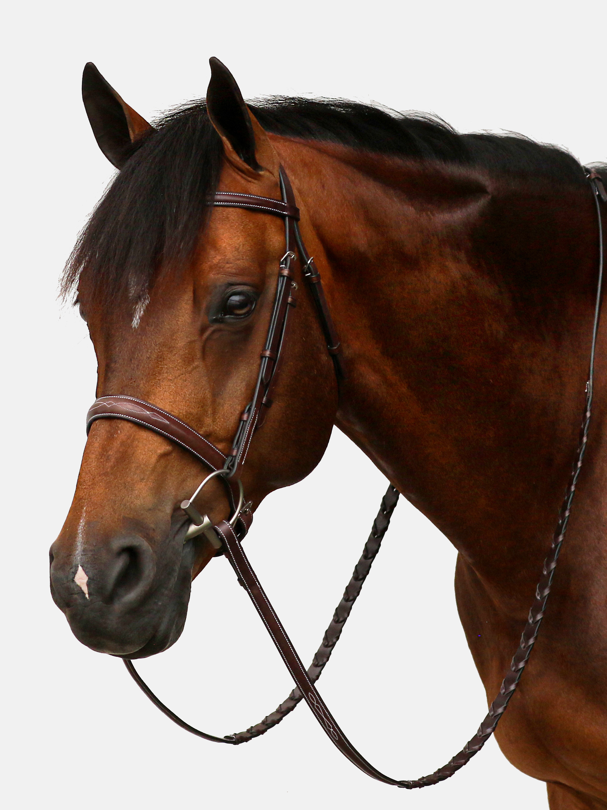 Equiline scott stewart hunter bridle