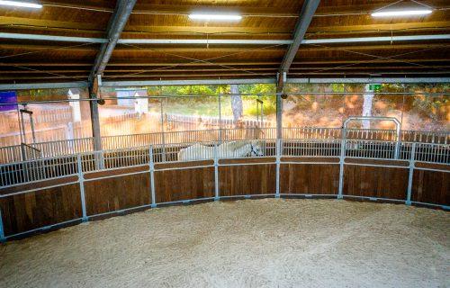 Bewegungstherapie auf dem Equine Reha-Zentrum Gut Marggraffshof