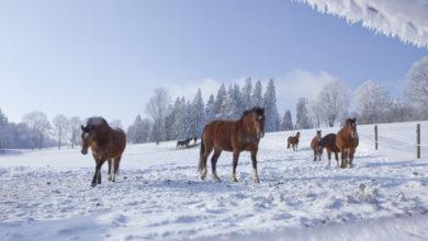 Winterizing The Hard Keeper Horse