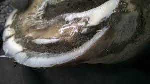Common Hoof Problems