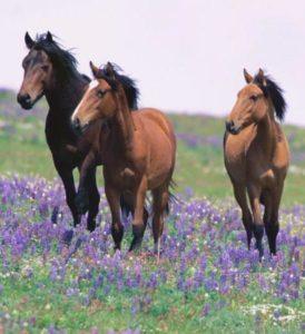 Essential Oils For Horses, Riders & Family E-Book