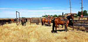 horse supplements, horse health, equine nutrition, equine nutrition