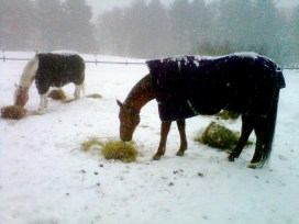 Freedom and Curly in the snow