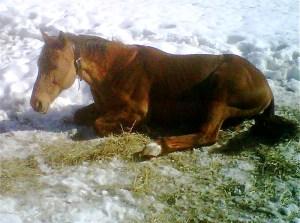 Freedom sleeping in the sun