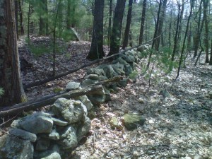 I see a lot of old stone walls when I'm out riding the trails.