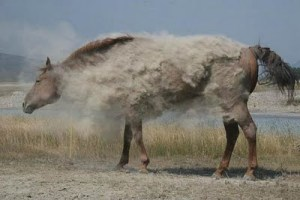 Freedom likes to roll in the dust, but this horse has him beat.
