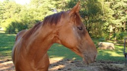 Freedom on the Wind came from CANTER New England