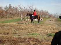 Riding through the Apple Orchard