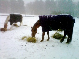 Horses out in the snow