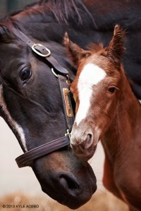 Zenyatta and Tapit colt, born April 1, 2013.