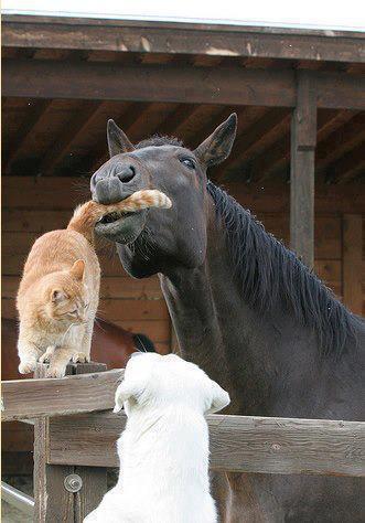 Horse cat dog