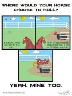 Where does your horse roll