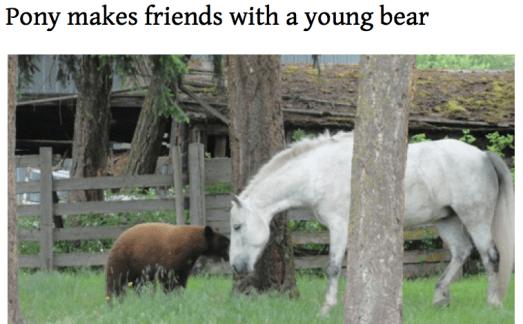 Pony befriends bear