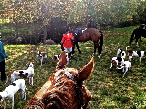 Watching the hounds