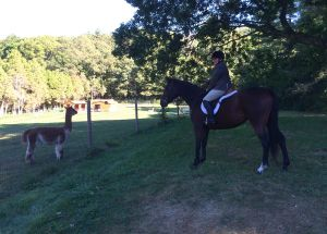 Jass and the Alpaca