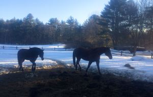 The horses haven't been blanket free for weeks.