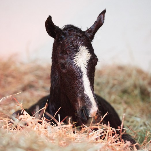 Zenyatta - War Front Foal