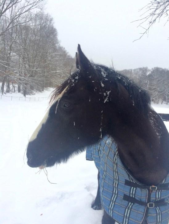 Zelda in the snow