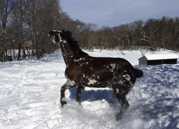 Zelda rolling in the snow