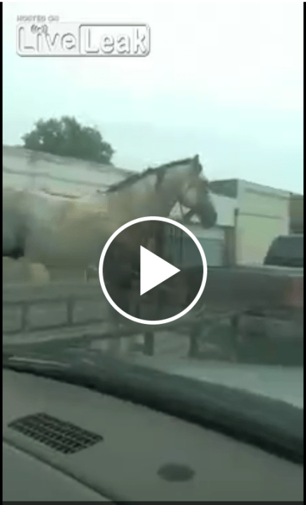 Horse on flatbed